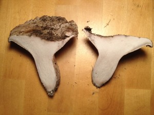 White Boletus sliced